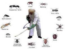 Mười loài côn trùng nguy hiểm nhất Việt Nam